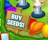 buy-seeds